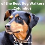 best dog walkers in Columbus