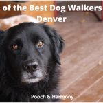 best dog walkers in Denver