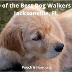 best dog walkers in Jacksonville, FL