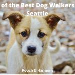 best dog walkers in Seattle