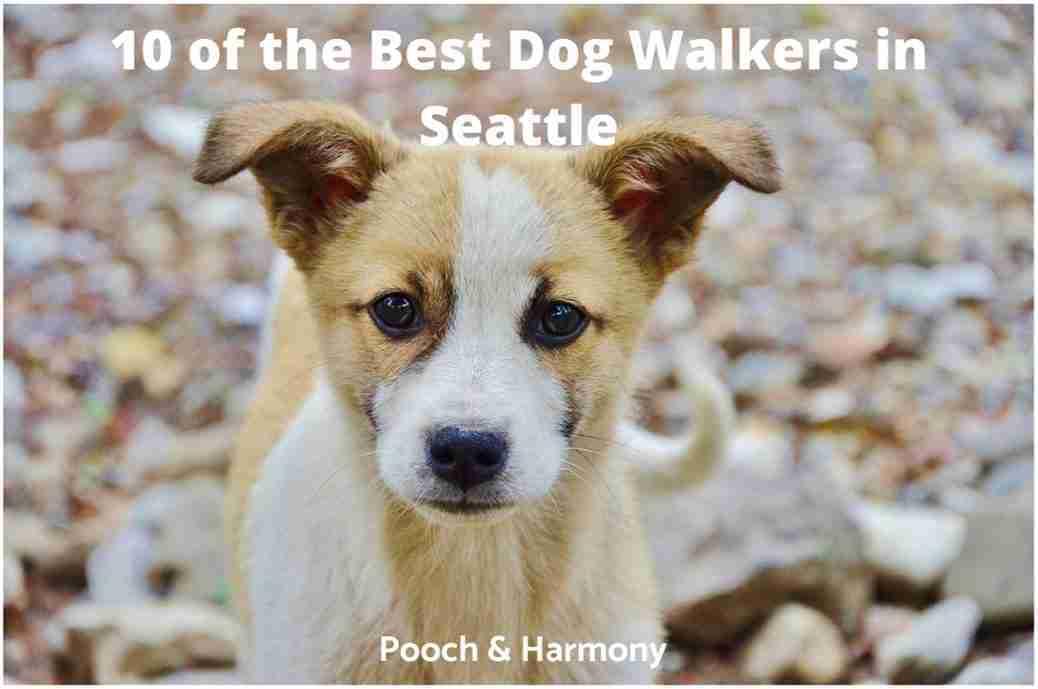 best dog walkers in Seattle
