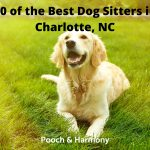 Best Dog Sitters in Charlotte, NC