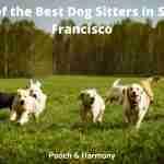 Best Dog Sitters in San Francisco