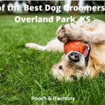 best dog groomers in Overland, KS