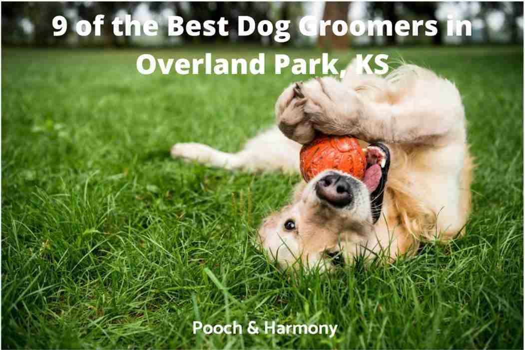 best dog groomers in Overland, KS