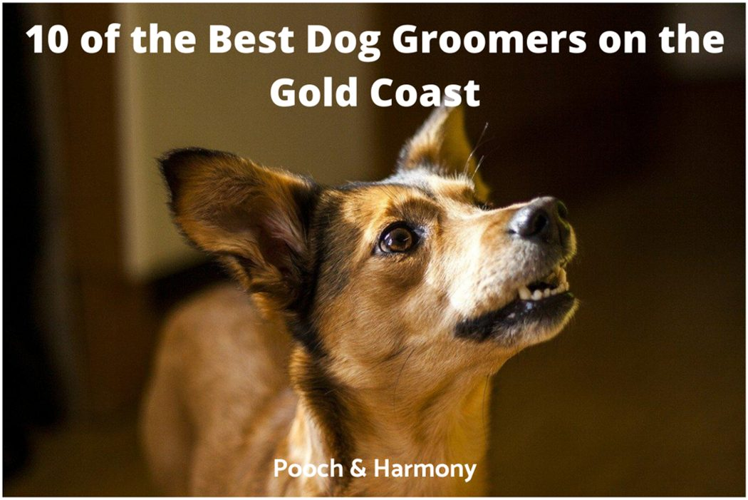 best dog groomers on the Gold Coast