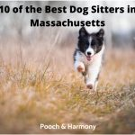 best dog sitters in Massachusetts