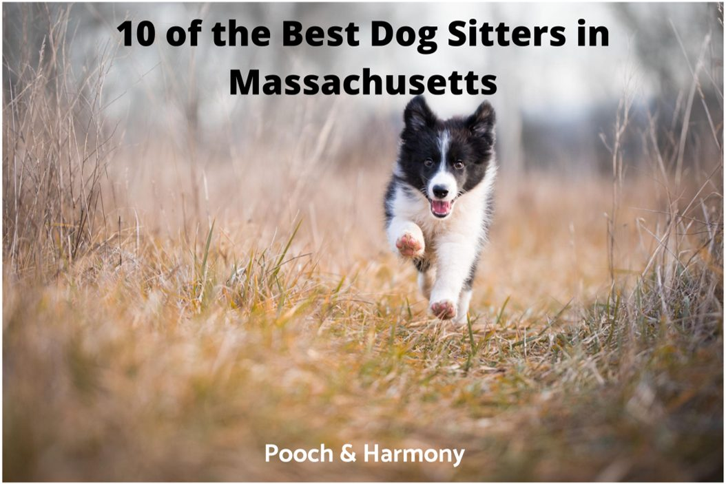 best dog sitters in Massachusetts