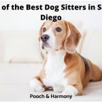 best dog sitters in San Diego
