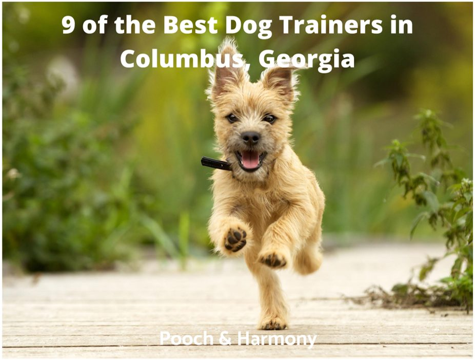 best dog trainers in Columbus, Georgia