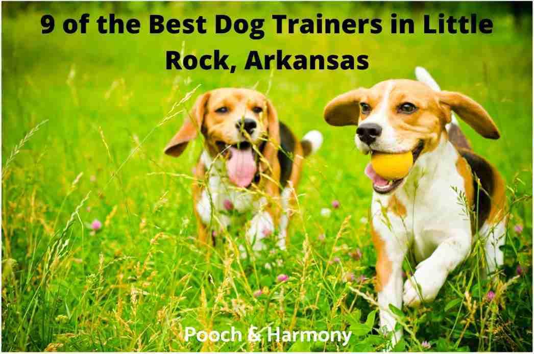 best dog trainers in Little Rock, Arkansas