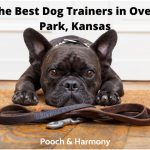 best dog trainers in Overland Park, Kansas