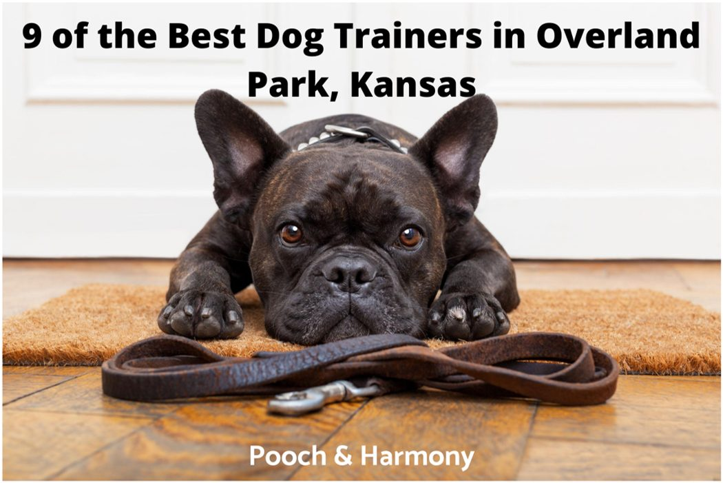 best dog trainers in Overland Park, Kansas