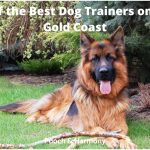 best dog trainers on the Gold Coast