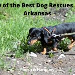 Best Dog Rescues in Arkansas