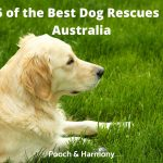 Best Dog Rescues in Australia