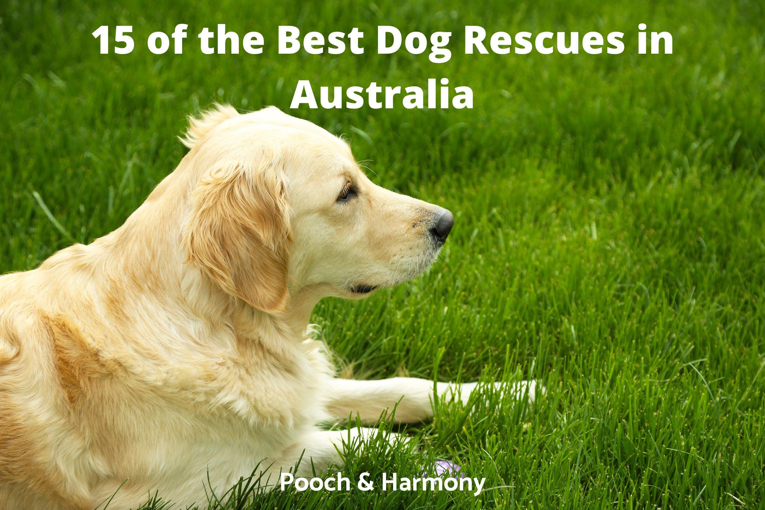 Best Dog Rescues in Australia
