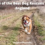 est Dog Rescues in England