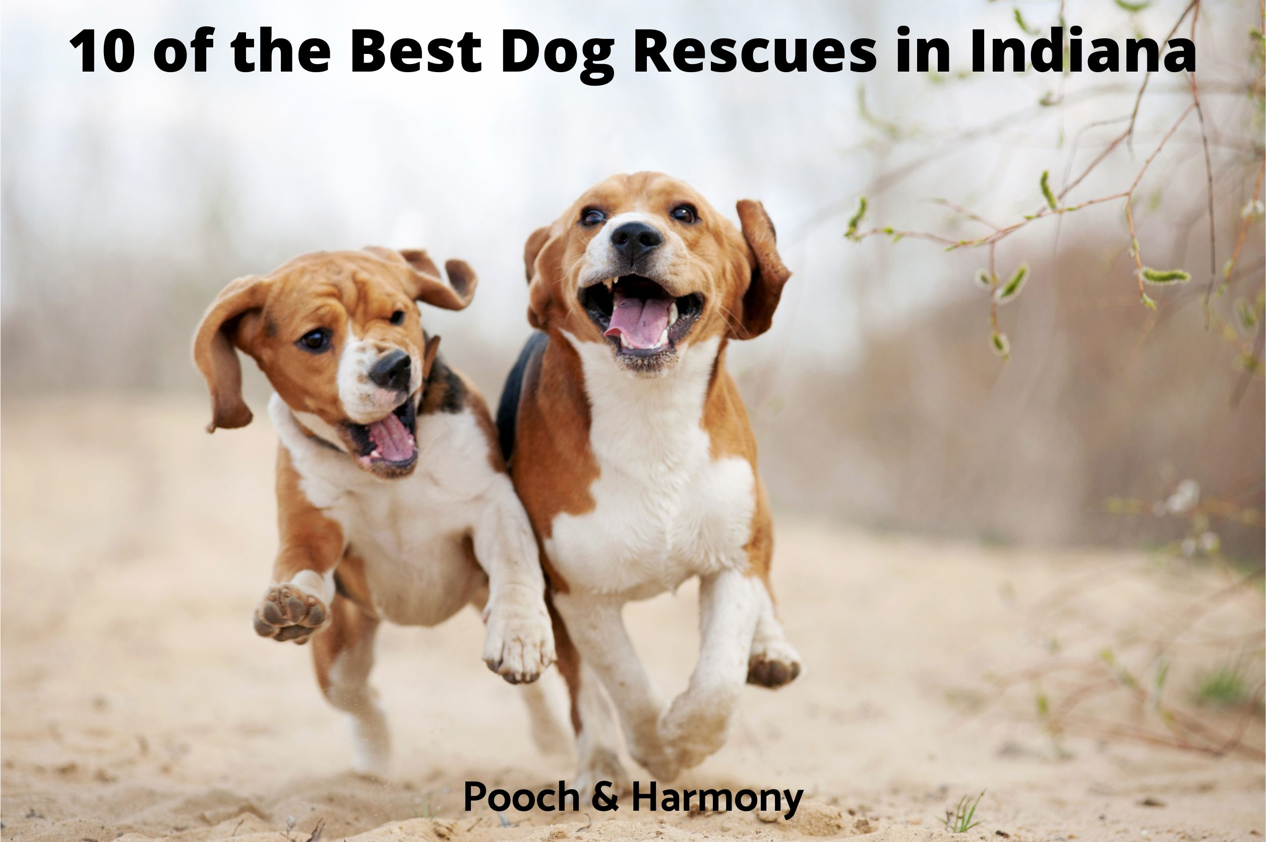 Best Dog Rescues in Indiana