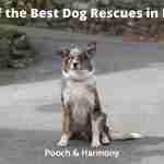 Best Dog Rescues in Iowa
