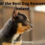 Best Dog Rescues in Ireland