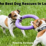 Best Dog Rescues in London