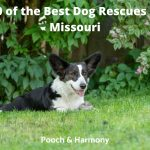 Best Dog Rescues in Missouri