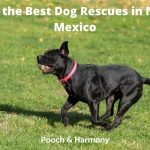 Best Dog Rescues in New Mexico