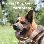Best Dog Rescues in New York State