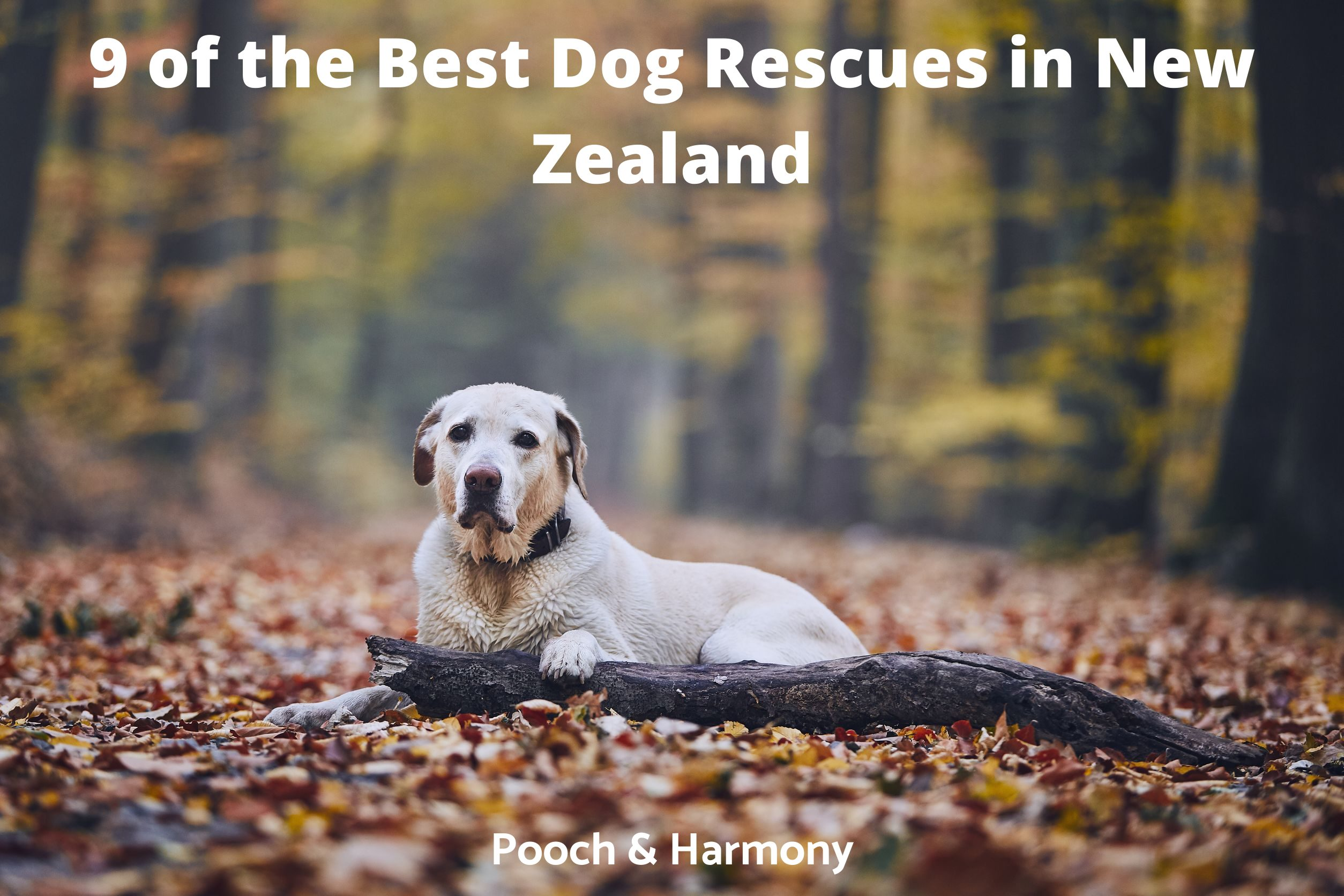 Best Dog Rescues in New Zealand
