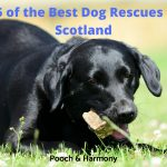 Best Dog Rescues in Scotland