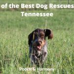 Best Dog Rescues in Tennessee