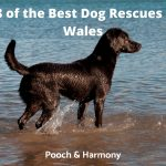 Best Dog Rescues in Wales