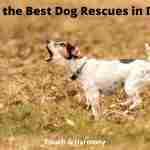 Best Dog Rescues in DFW