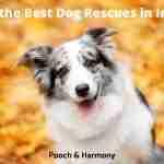 Best Dog Rescues in Idaho
