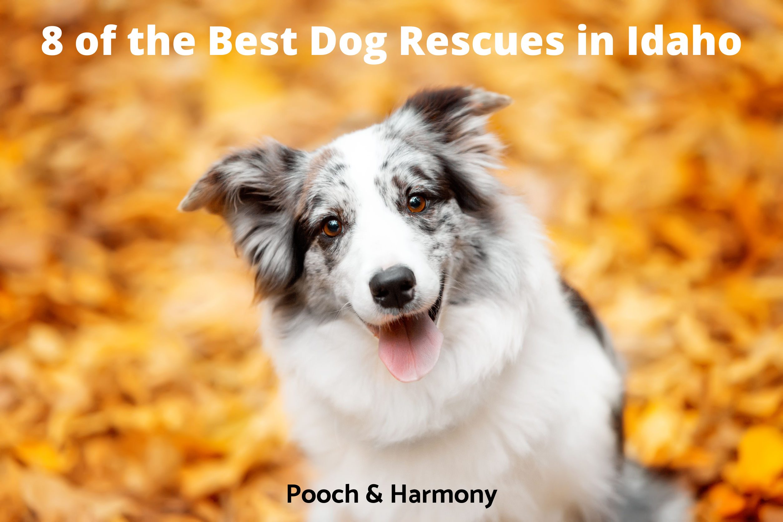 Best Dog Rescues in Idaho