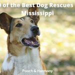 Best Dog Rescues in Mississippi