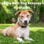 Best Dog Rescues in Nebraska