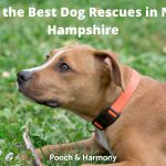 Best Dog Rescues in New Hampshire