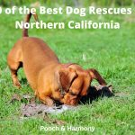 Best Dog Rescues in Northern California