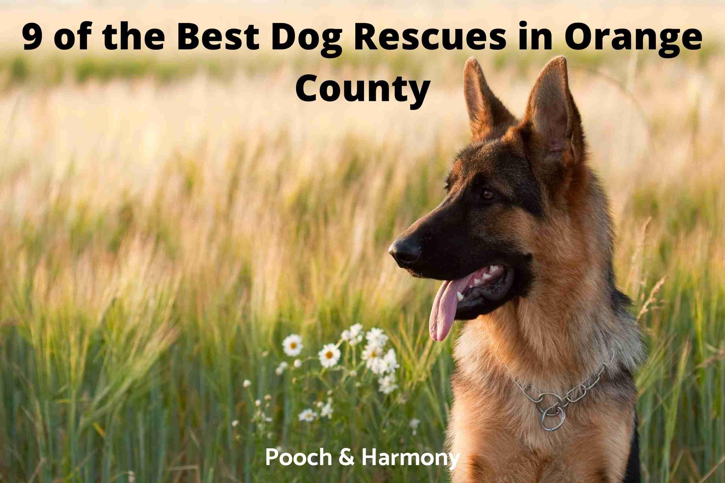 Best Dog Rescues in Orange County