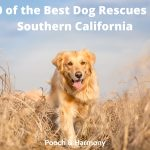 Best Dog Rescues in Southern California