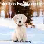 Best Dog Rescues in Utah