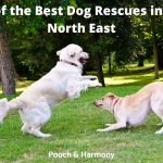 Best Dog Rescues in the North East