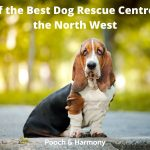 Dog Rescue Centres in the North West