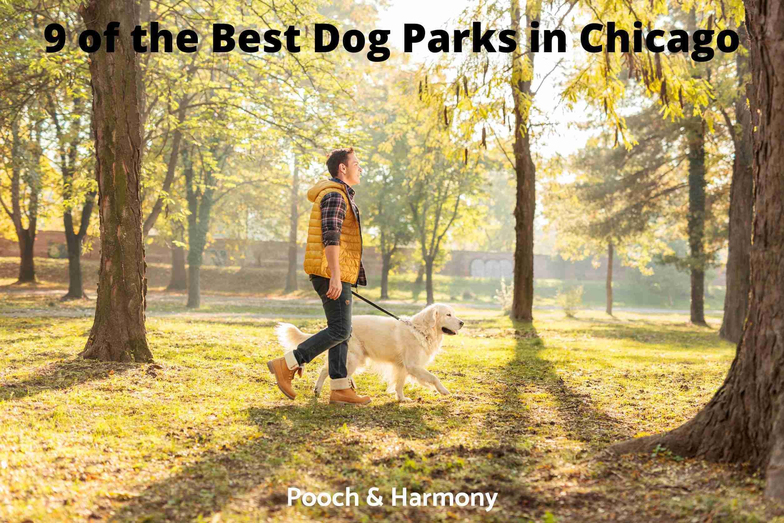 Best Dog Parks in Chicago