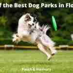Best Dog Parks in Florida