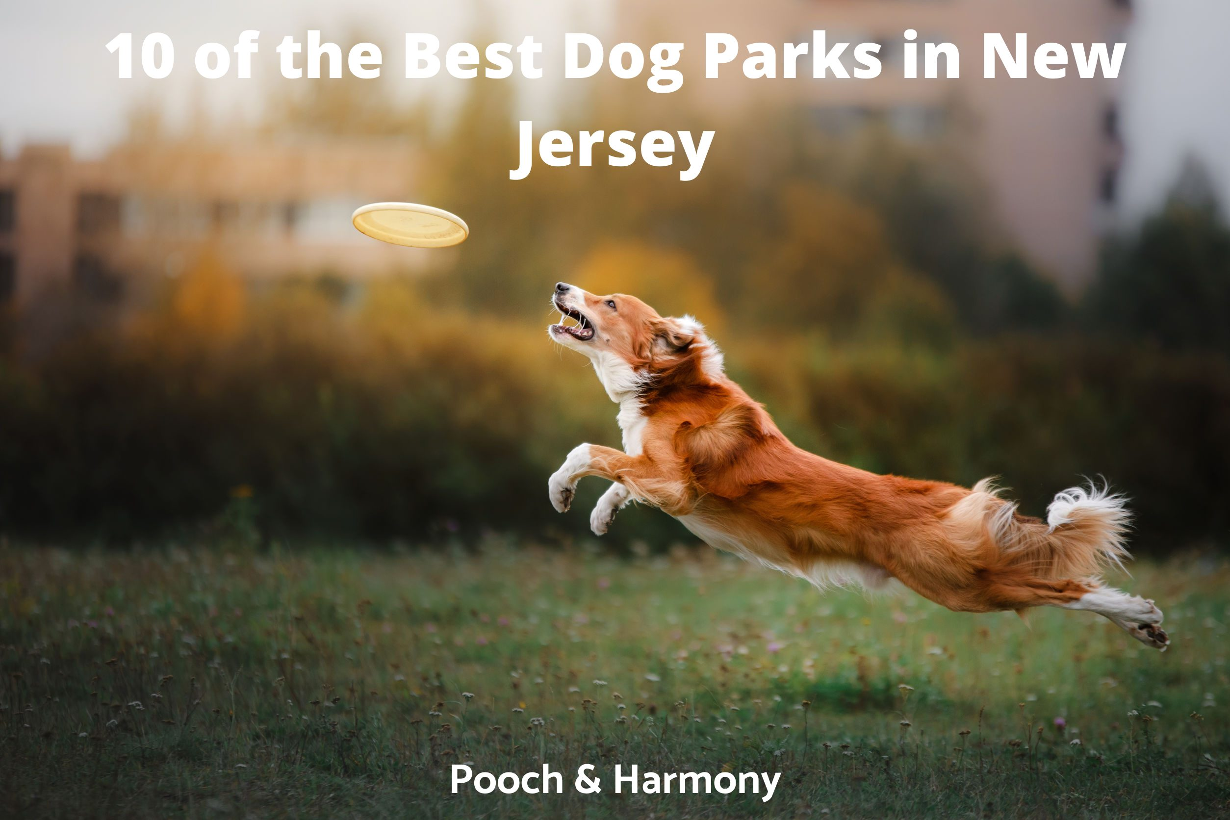 Best Dog Parks in New Jersey