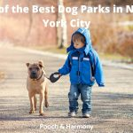 Best Dog Parks in New York City