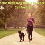 Best Dog Parks in Northern California